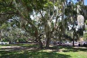 Tree ordinance