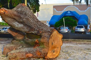 A large stump sits on the grounds of the Safety Harbor Resort and Spa parking lot.