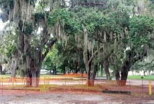 More than a dozen trees at the Safety Harbor Spa have been marked for removal in order to make room for a new parking lot.