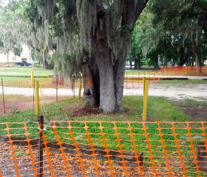 A tree marked for removal at the Safety Harbor Spa.