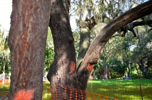 A moratorium would prevent removing trees in Safety Harbor until April 2015, with exceptions.