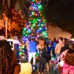 Safety Harbor Christmas tree