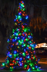 Safety Harbor Christmas Tree.