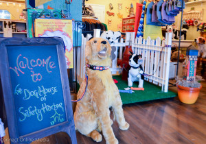 A number of businesses have opened in downtown Safety Harbor in the past couple of months, including the Dog House at 737 Main St.