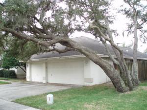 Trees at Wayne McKinney's home in Safety Harbor. Credit: Wayne McKinney.