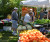 Vistitors to Safety Harbor's Famers Market on Main check out the goods at Kilpatrick Produce.