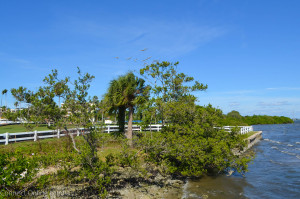 Work on Phase 2 of Safety Harbor's Waterfront Park will focus on adding basic amenities and replenishing the shoreline.