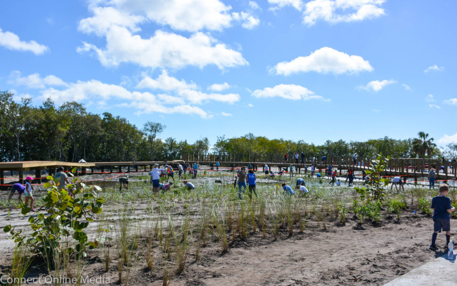 Roughly 200 volunteers turned out to help with a community planting project that saw more than 10,000 new plants installed at Safety Harbor's Waterfront Park on Saturday, Feb. 26, 2017.