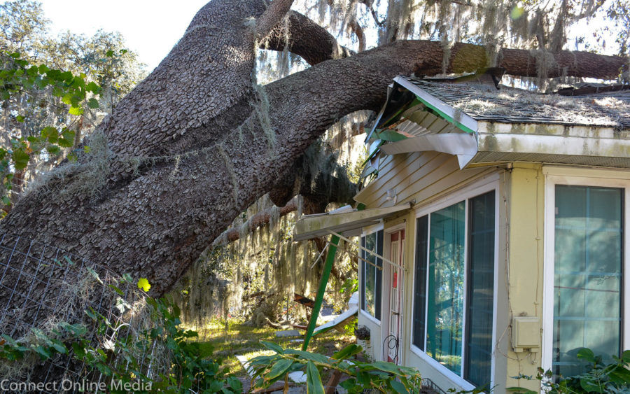 Tree crushes home